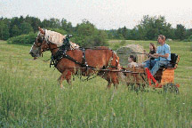 horseandcarriage