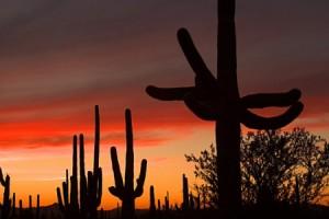 arizona_scenic_sonoran-desert_saguaro-np-west_saguaro-cactu