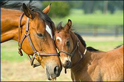 horses-sm
