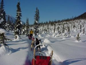 normal_Alaska_Dog_Sledding_009