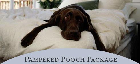 pooch_bigpic