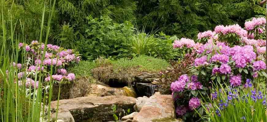 still_garden