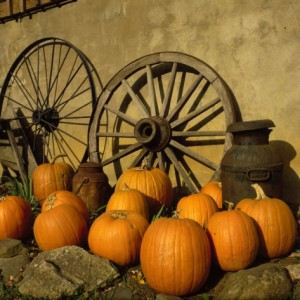 tom-dietrich-pumpkins-wagon-wheels-and-milk-can-todd-nc_i-G-28-2811-B1JOD00Z