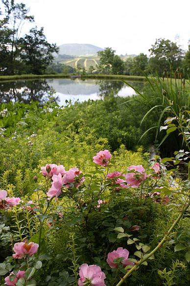 Meadow-Sweet-Garden-Inn