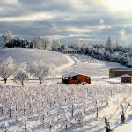 First-Snow-at-Amador-County-Vineyard