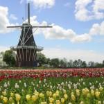 hollandMItulipswindmill