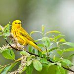 Inn-&-Spa-at-Cedar-Falls-birds