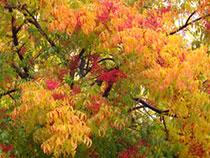 ojai_leaves2
